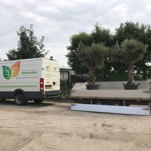 danie de jong olijfbomen